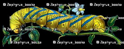 Caterpillar - Acherontia atropos