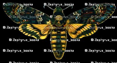 Moth / Butterfly Acherontia atropos