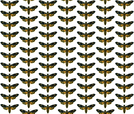 Moth / Butterfly Acherontia atropos fabric by zephyrus_books on Spoonflower - custom fabric