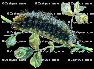 Caterpillar Arctia caja