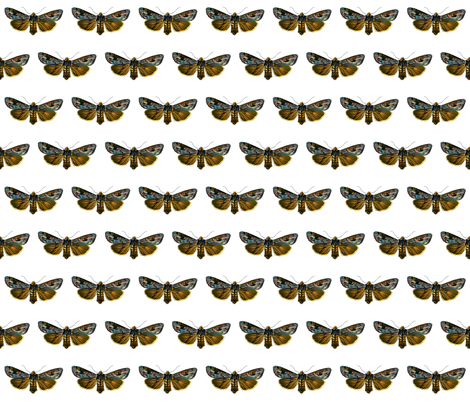 Moth Calocampa vetusta fabric by zephyrus_books on Spoonflower - custom fabric