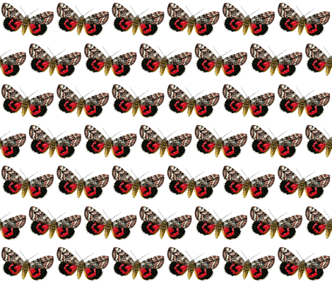 Butterfly Catocala elocata fabric by zephyrus_books on Spoonflower - custom fabric