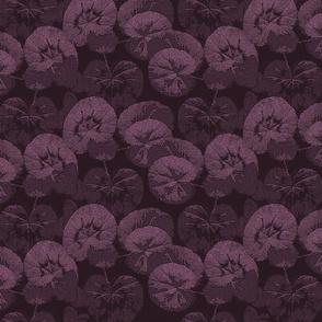 Pelargoniumina in a Row