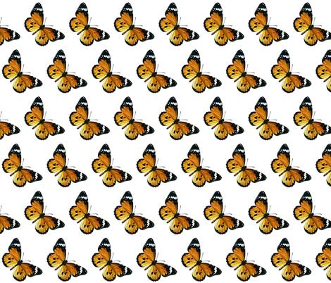 Butterfly Danaus chrysippus fabric by zephyrus_books on Spoonflower - custom fabric