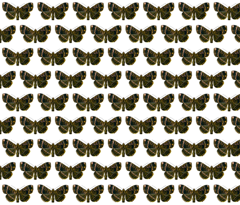 Butterfly Mania maura fabric by zephyrus_books on Spoonflower - custom fabric
