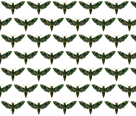 Moth Deilephila Nerii fabric by zephyrus_books on Spoonflower - custom fabric