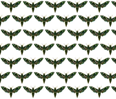 Moth Deilephila Nerii fabric by zephyrus_books on Spoonflower - custom fabric