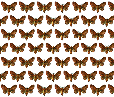 Butterfly Lasiocampa quercifolia fabric by zephyrus_books on Spoonflower - custom fabric
