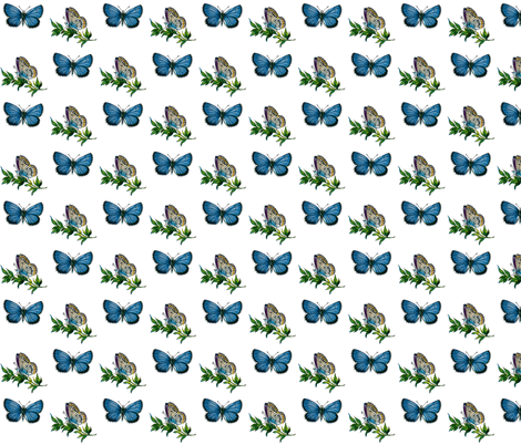 Butterfly Plebeius idas (male) fabric by zephyrus_books on Spoonflower - custom fabric