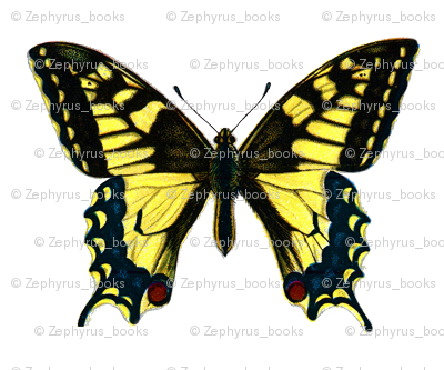 Butterfly Papilio machaon