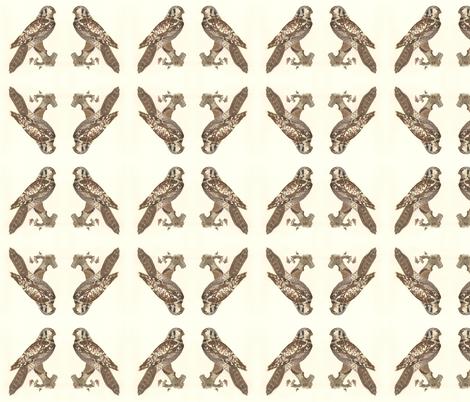 Northern Hawk Owl - Vintage Bird / Birds of Prey Print fabric by zephyrus_books on Spoonflower - custom fabric