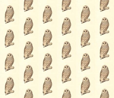 The Barred Owl - Vintage Bird / Birds of Prey Print fabric by zephyrus_books on Spoonflower - custom fabric