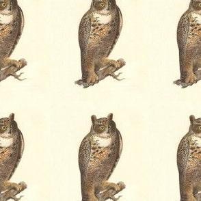 The Great Horned Owl - Vintage Bird / Birds of Prey Print