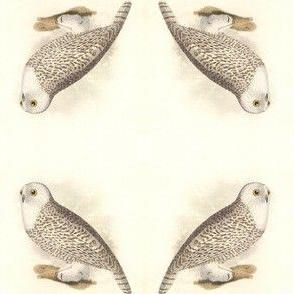Snowy Owl - Vintage Bird / Birds of Prey Print