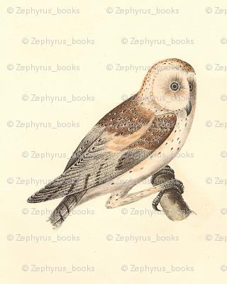 The American Barn Owl - Vintage Bird / Birds of Prey Print