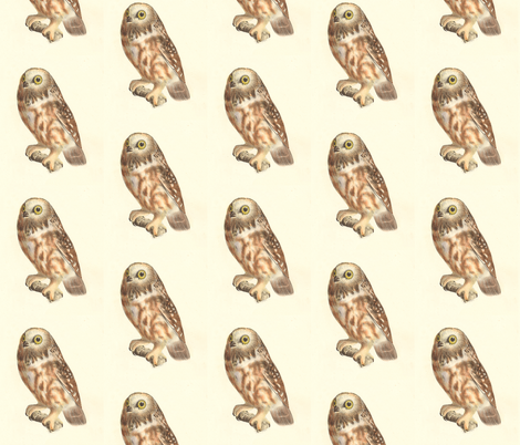 Northern Saw-whet Owl - Vintage Bird / Birds of Prey Print fabric by zephyrus_books on Spoonflower - custom fabric