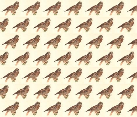 The Short-eared Owl - Vintage Bird / Birds of Prey Print fabric by zephyrus_books on Spoonflower - custom fabric