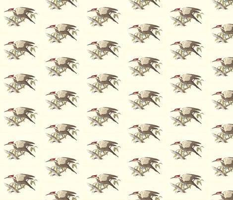 Pileated Woodpecker - Vintage Bird / Birds Print fabric by zephyrus_books on Spoonflower - custom fabric