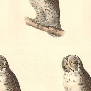 The Great Grey Owl - Vintage Bird / Birds of Prey Print