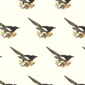 The Magpie - Bird / Birds
