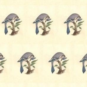 The Blue Jay - Bird / Birds