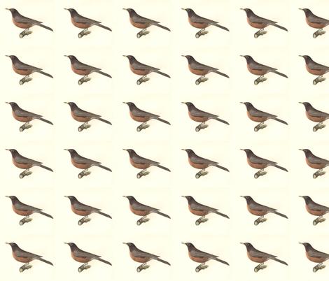 North American Robin - Bird / Birds fabric by zephyrus_books on Spoonflower - custom fabric