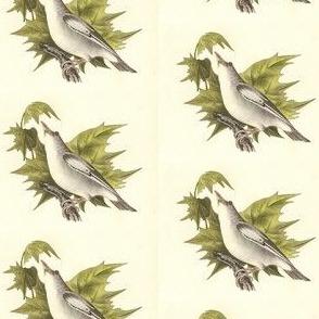 The Red-eyed Greenlet - Bird / Birds