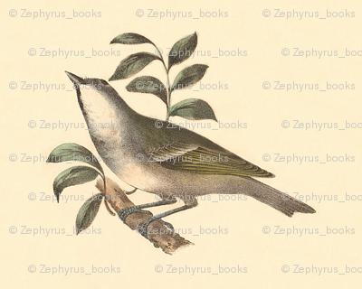 The Solitary Greenlet - Bird / Birds