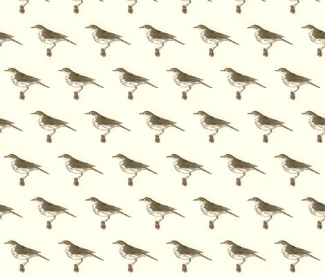 the oven bird