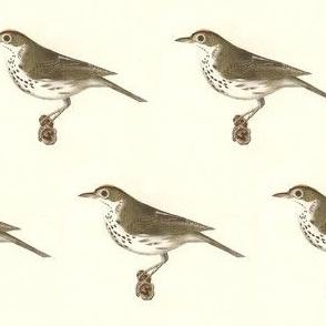 The Oven-Bird / Birds