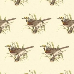 The Black-throated Bunting - Bird / Birds
