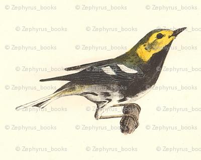 The Black-throated Green Warbler - Bird / Birds