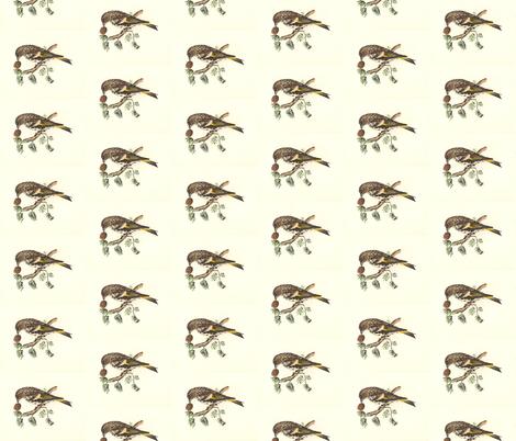 The Pine Finch (Pine Siskin) - Bird / Birds fabric by zephyrus_books on Spoonflower - custom fabric