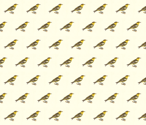 The Cape-May Warbler - Bird / Birds fabric by zephyrus_books on Spoonflower - custom fabric