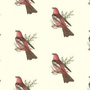 The Pine Bulfinch - Bird / Birds