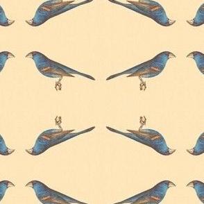 The Blue Grosbeak - Bird / Birds
