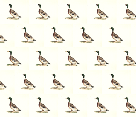 The Mallard (Wild duck) Bird - Birds / Ducks & Geese (Goose) fabric by zephyrus_books on Spoonflower - custom fabric