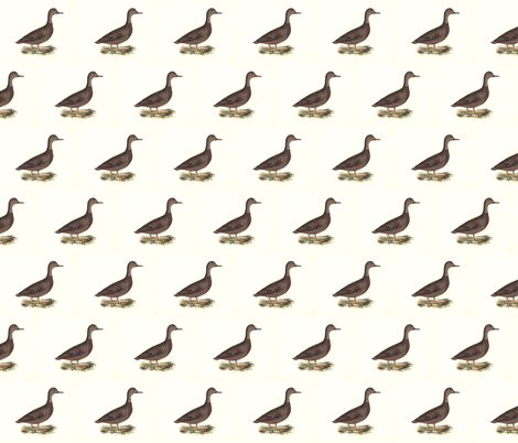 The Black Duck Bird - Birds / Ducks & Geese (Goose) fabric by zephyrus_books on Spoonflower - custom fabric