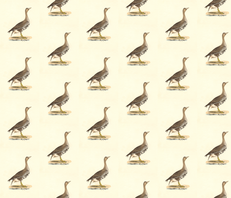 The White-footed Goose Bird - Vintage Bird / Birds Print fabric by zephyrus_books on Spoonflower - custom fabric