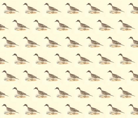The Pintail Duck Bird - Birds / Ducks & Geese (Goose) fabric by zephyrus_books on Spoonflower - custom fabric