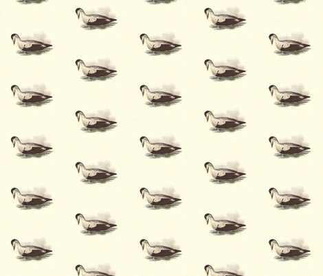 The Eider Duck Bird - Birds / Ducks & Geese (Goose) fabric by zephyrus_books on Spoonflower - custom fabric