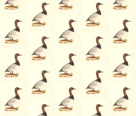 The Canvassback Duck Bird - Birds / Ducks & Geese (Goose) fabric by zephyrus_books on Spoonflower - custom fabric
