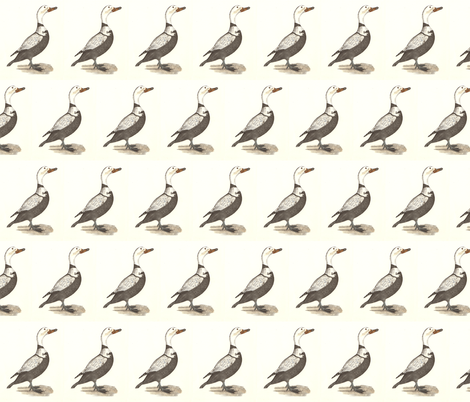 The Labrador Duck Bird - Birds / Ducks & Geese (Goose) fabric by zephyrus_books on Spoonflower - custom fabric
