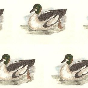 The Whistler Bird - Birds / Ducks & Geese (Goose)