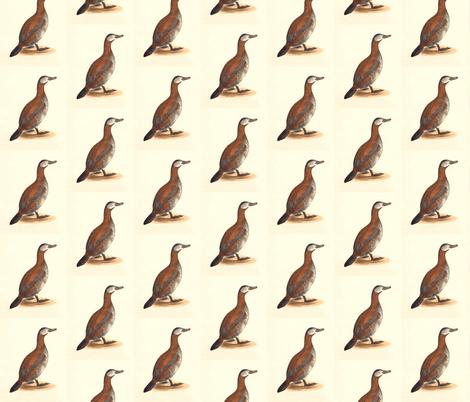 The Ruddy Duck Bird - Birds / Ducks & Geese (Goose) fabric by zephyrus_books on Spoonflower - custom fabric