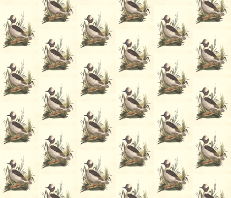 The Buffle-headed Duck Bird - Birds / Ducks & Geese (Goose) fabric by zephyrus_books on Spoonflower - custom fabric