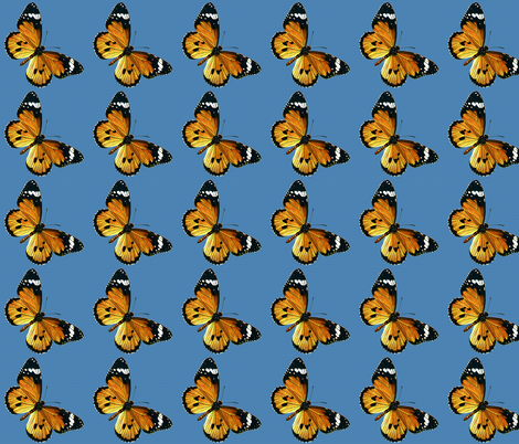 Butterfly Danaus chrysippus fabric by zephyrus_books on Spoonflower - custom fabric