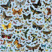 Rlarge_square_butterfly_poster_b4d5f1_shop_thumb
