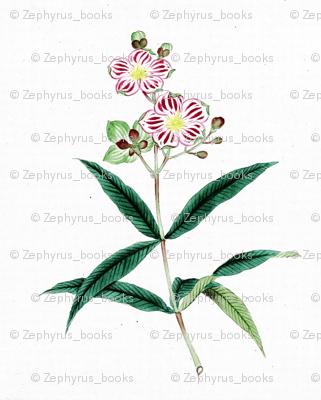 Japanese Flower 7