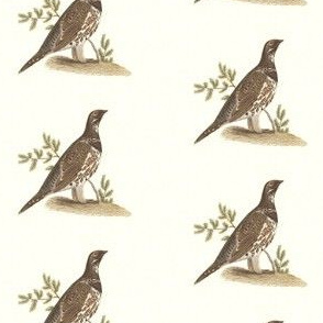 The Spruce Grouse - Bird / Birds